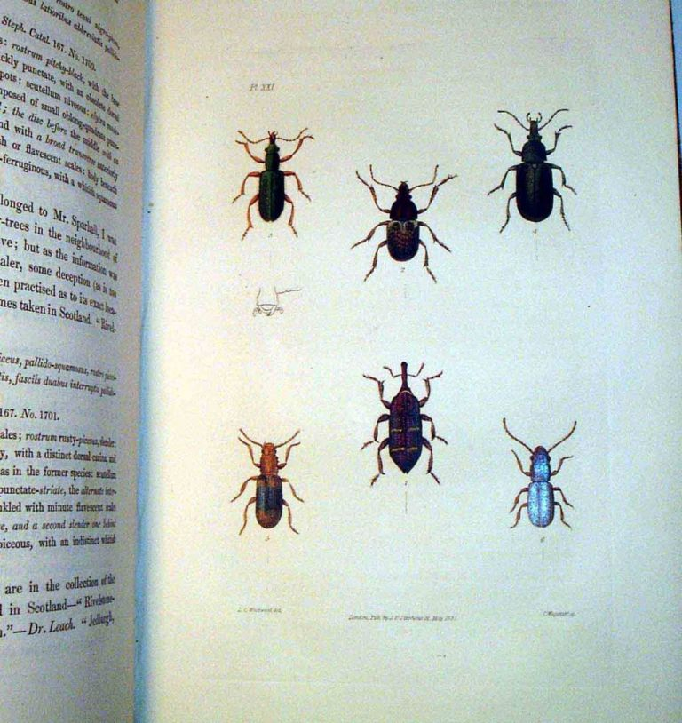 Illustrations of British Entomology: A Synopsis of Indigenous Insects: Containing their Generic...